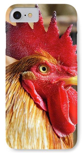 Colombia, Minca Domestic Rooster IPhone Case by Matt Freedman