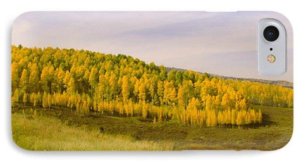 Colorado Aspens Phone Case by Brian Harig