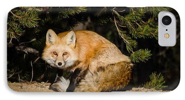 Colorado Red Fox IPhone Case