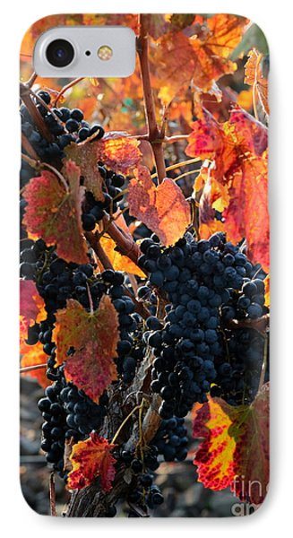 Colorful Autumn Grapes Phone Case by Carol Groenen