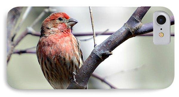 Colorful Bird In Winter Phone Case by Susan Leggett