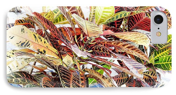 Colorful - Croton - Plant IPhone Case by D Hackett