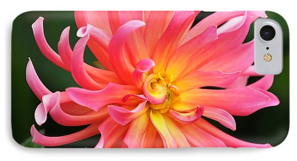 Colorful Dahlia IPhone Case