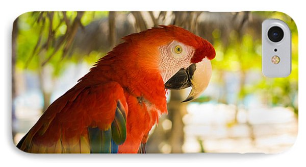 Colorful Macaw IPhone Case by Anthony Doudt