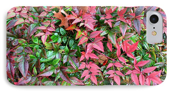 IPhone Case featuring the photograph Colorful Nandina by Connie Fox