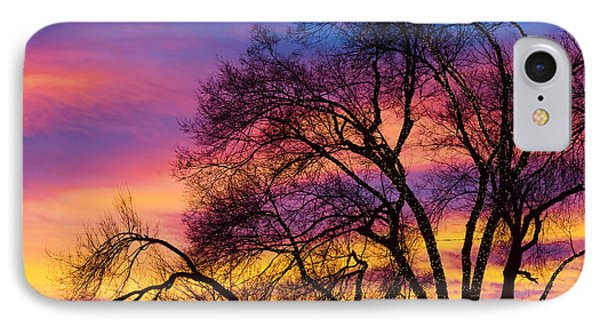 Colorful Silhouetted Trees 25 IPhone Case by James BO  Insogna