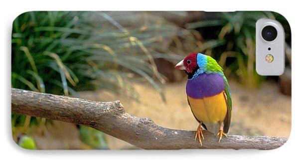 Colourful Bird IPhone Case by Daniel Precht