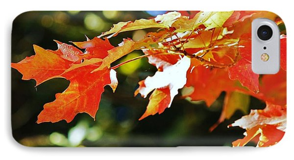 Colours Of Fall IPhone Case by Al Fritz
