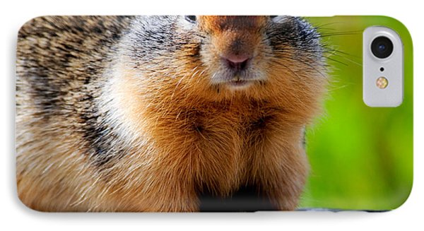 Columbian Ground Squirrel IPhone Case by Bonnie Fink