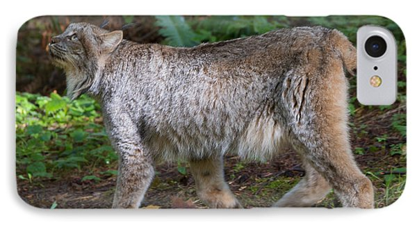 Lynx Stare IPhone Case by Mike Dawson