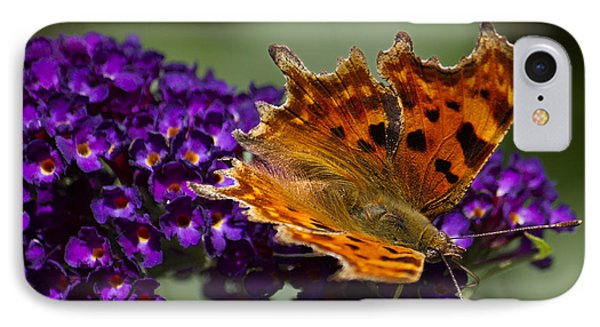 Comma Butterfly On Buddleia IPhone Case by Shirley Mitchell