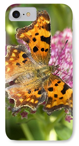Comma Butterfly IPhone Case by Richard Thomas