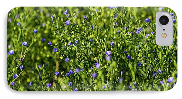 Commercial Flax Field Near Mott, North IPhone Case by Chuck Haney