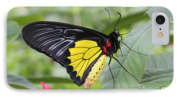 IPhone Case featuring the photograph Common Birdwing Butterfly by Judy Whitton