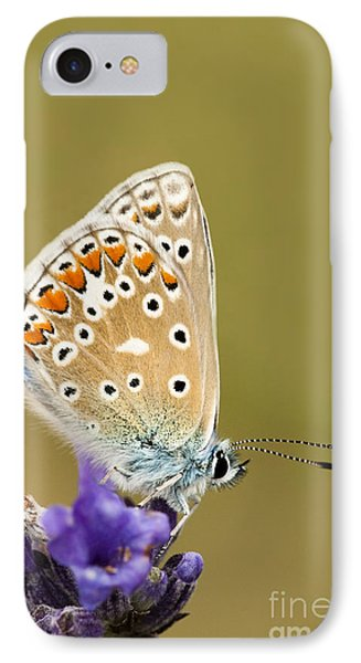 Common Blue Phone Case by Anne Gilbert