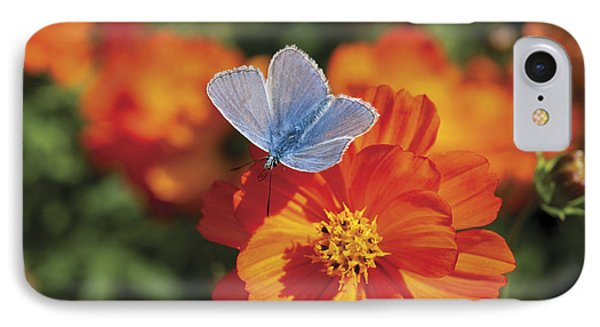 IPhone Case featuring the photograph Common Blue Butterfly by Lana Enderle