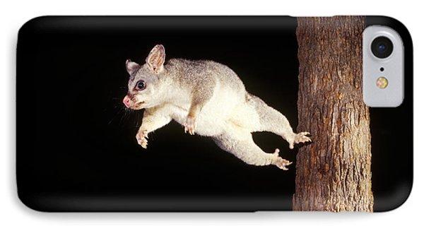 Common Brush-tailed Possum IPhone Case