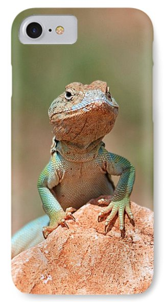 Common Collared Lizard 2 IPhone Case by Elizabeth Budd