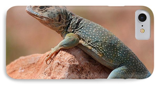 IPhone Case featuring the photograph Common Collared Lizard by Elizabeth Budd