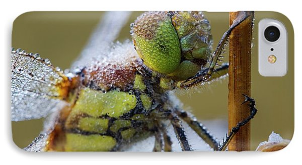 Common Darter Dragonfly IPhone Case by Heath Mcdonald