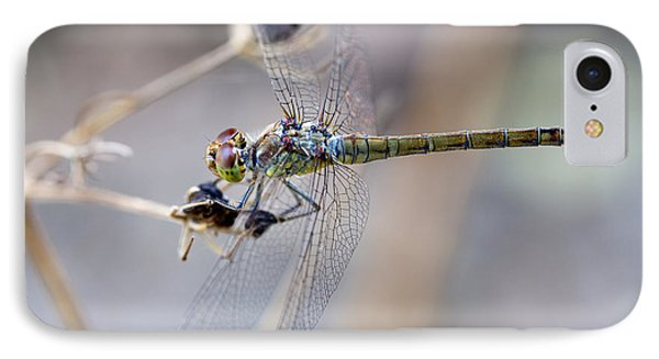 Common Darter Female On Crete IPhone Case by Paul Cowan