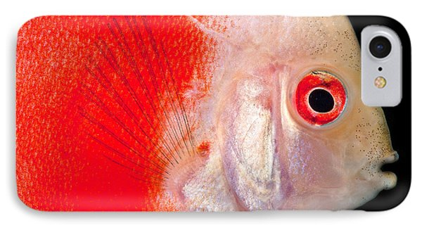 Common Discus Phone Case by Dante Fenolio