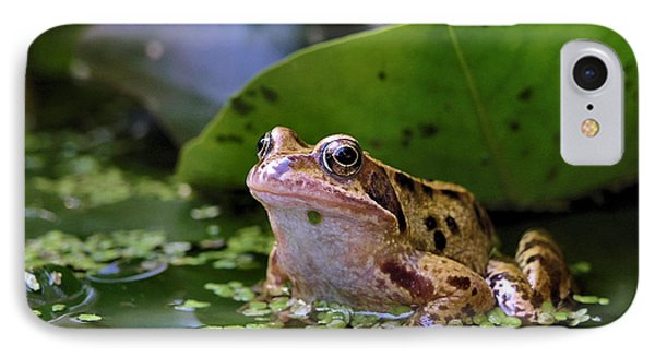 Common Frog IPhone Case by Ron Harpham