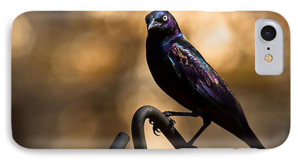 IPhone Case featuring the photograph Common Grackle by Robert L Jackson