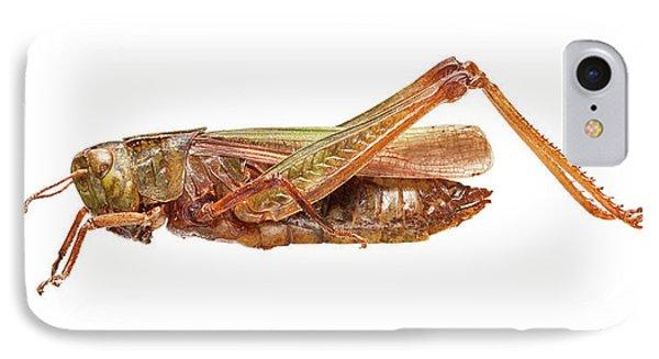 Common Green Grasshopper IPhone 7 Case
