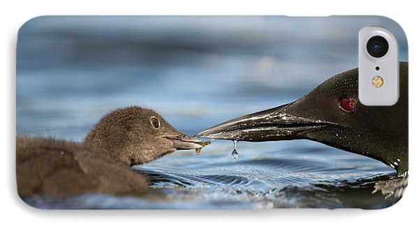 Loon iPhone 7 Case - Common Loon Feeding Chick by Dr P. Marazzi