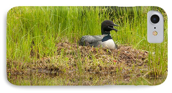 IPhone Case featuring the photograph Common Loon Nesting by Brenda Jacobs