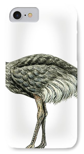 Common Ostrich Phone Case by Anonymous