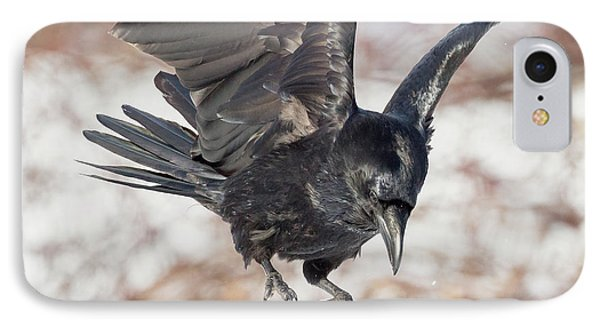 Common Raven Square IPhone Case
