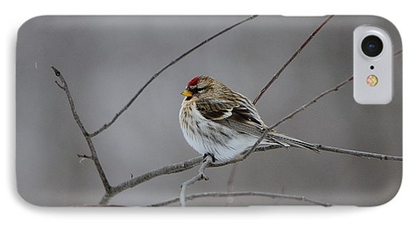 IPhone Case featuring the photograph Common Redpoll by David Porteus