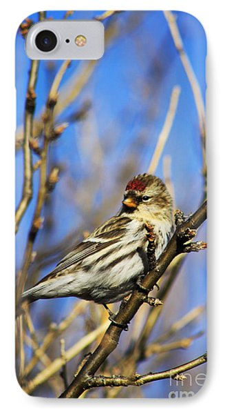Common Redpoll Female Phone Case by Alyce Taylor