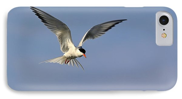 Common Tern Hovering Phone Case by Tony Beck
