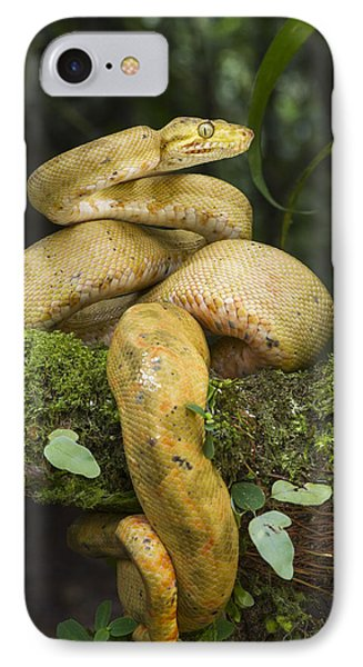 Common Tree Boa -yellow Morph IPhone Case by Pete Oxford