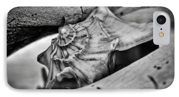 Conch Shell Two IPhone Case