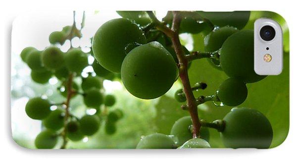 Concord Grape IPhone Case