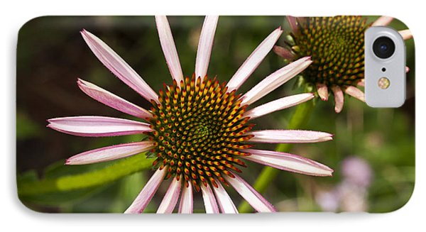 Cone Flower - 1 IPhone Case by Charles Hite