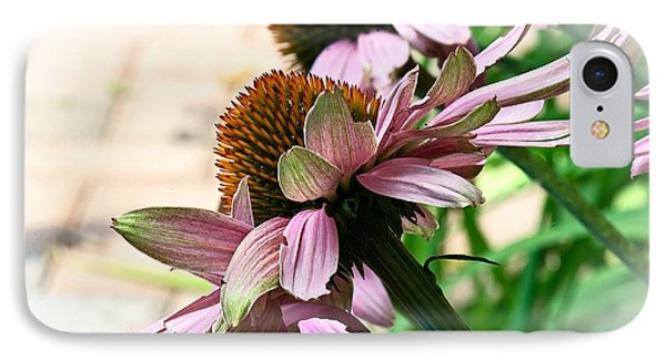 Cone Flower 6 IPhone Case