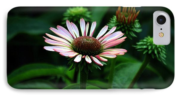 IPhone Case featuring the photograph Coneflower 2014 by Marjorie Imbeau