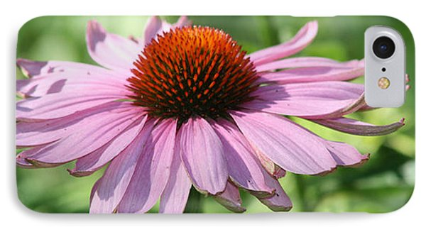 Coneflower In Bloom Phone Case by Sharon McLain