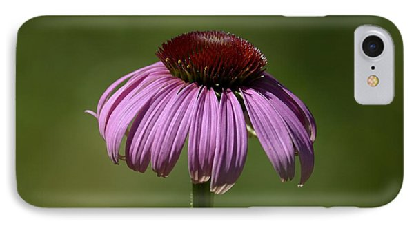 Coneflower IPhone Case by Randy Bodkins