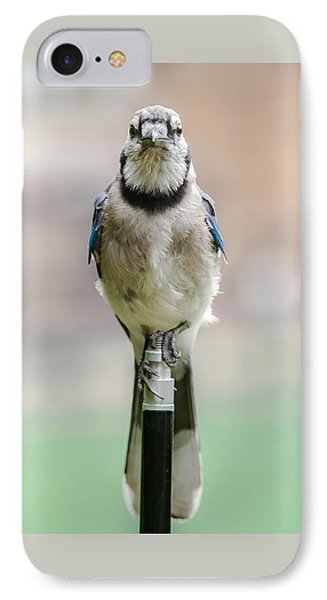 Contemplative Blue Jay IPhone Case