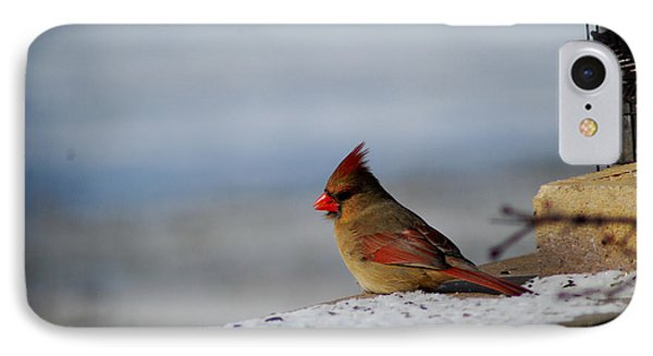 Contented Female Cardinal IPhone Case