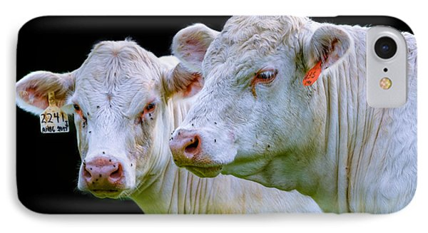 Contrast Cows IPhone Case by Brian Stevens