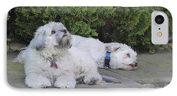 IPhone Case featuring the photograph Havanese Dog Sisters B by Laurie Tsemak