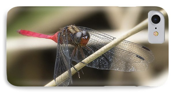 Cool Dragon Fly 0001 IPhone Case