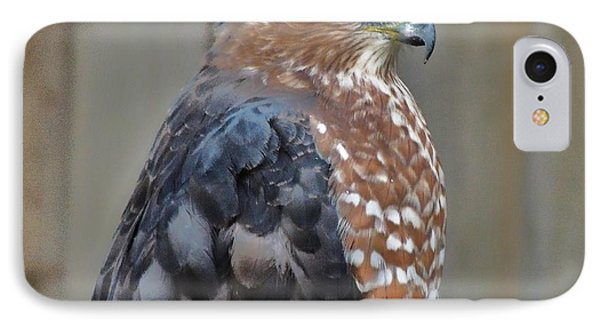 Coopers Hawk 3 IPhone Case by Helen Carson